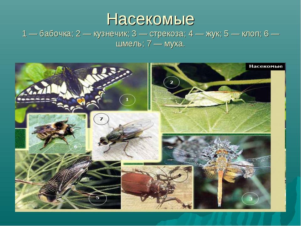 Насекомые 1 — бабочка; 2 — кузнечик; 3 — стрекоза; 4 — жук; 5 — клоп; 6 — шме...
