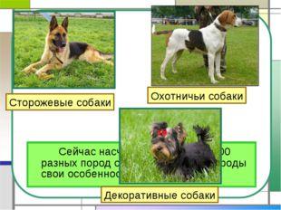Сейчас насчитывается более 400 разных пород собак. И у каждой породы свои о