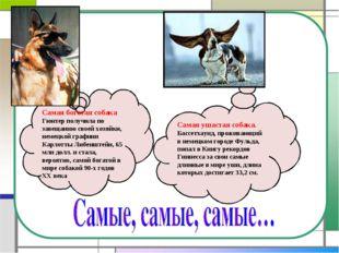 Самая богатая собака Гюнтер получила по завещанию своей хозяйки, немецкой гра