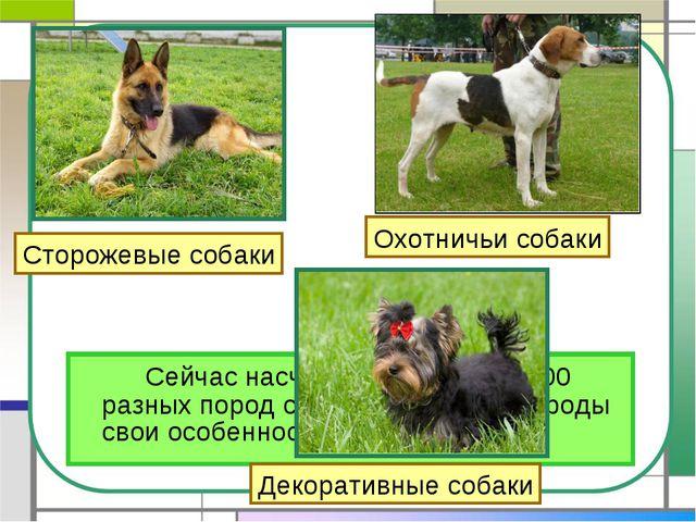 Сейчас насчитывается более 400 разных пород собак. И у каждой породы свои о...