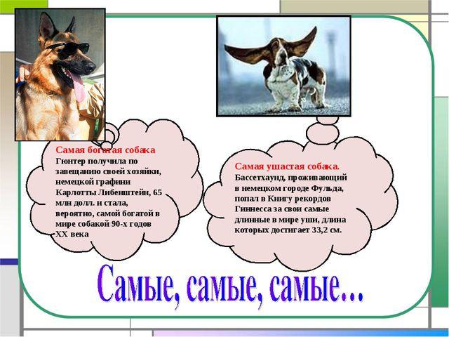 Самая богатая собака Гюнтер получила по завещанию своей хозяйки, немецкой гра...