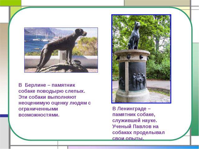 В Берлине – памятник собаке поводырю слепых. Эти собаки выполняют неоценимую...