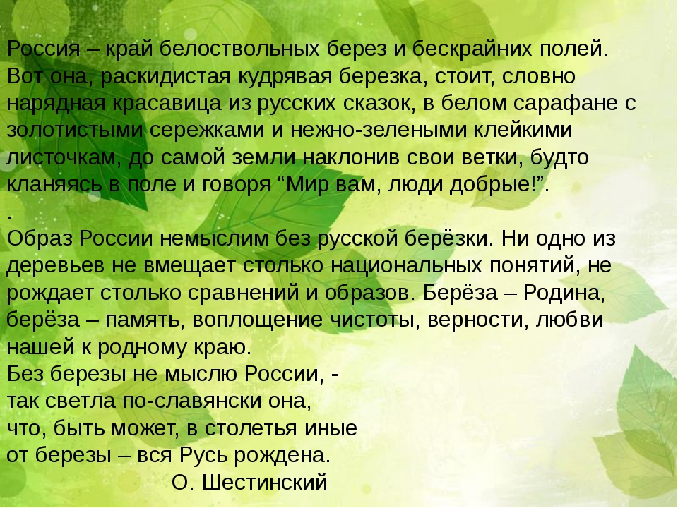 Россия – край белоствольных берез и бескрайних полей. Вот она, раскидистая ку...