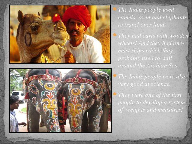 The Indus people used camels, oxen and elephants to travel over land. They ha...