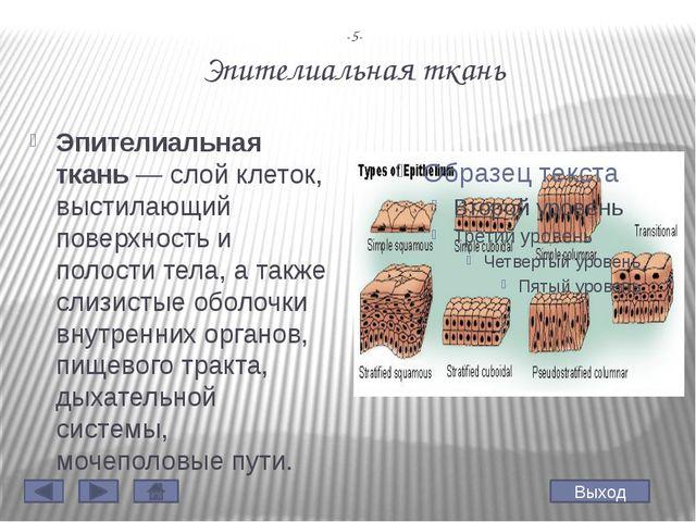 -7- Соединительная ткань Соедини́тельная ткань— этотканьживого организма,...