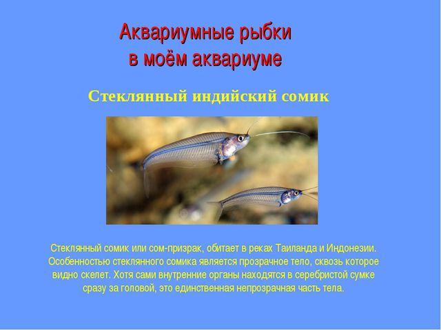 Аквариумные рыбки в моём аквариуме Стеклянный индийский сомик Стеклянный соми...