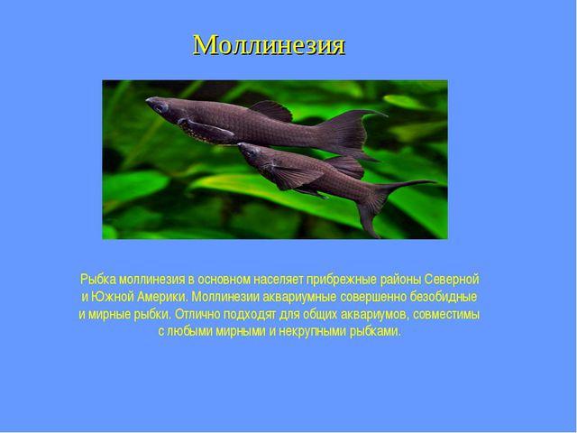 Моллинезия Рыбка моллинезия в основном населяет прибрежные районы Северной и...