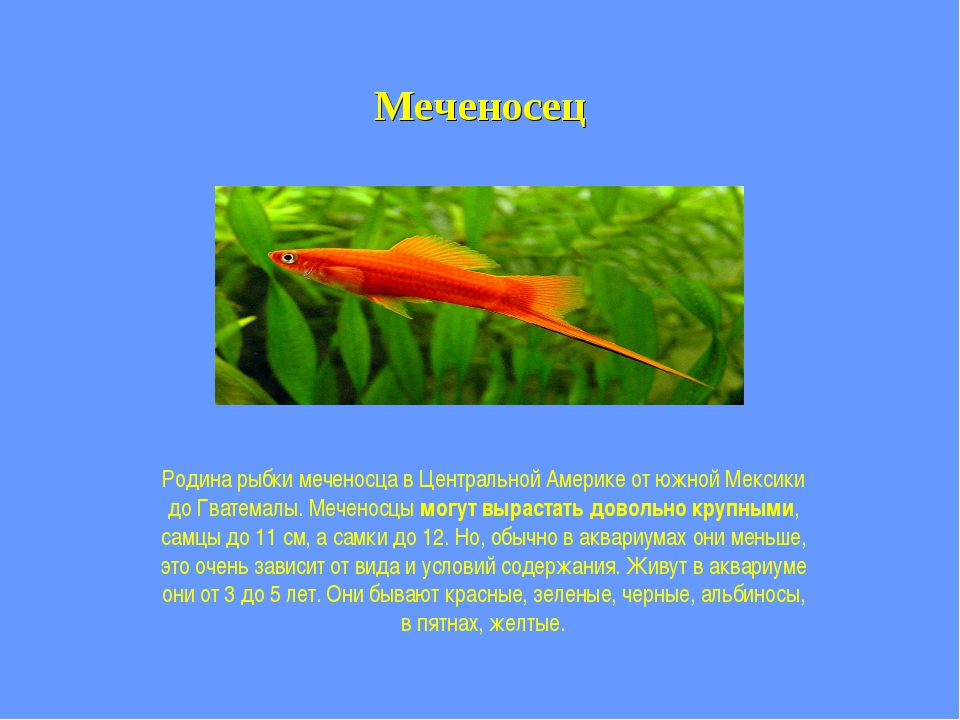 Меченосец Родина рыбки меченосца в Центральной Америке от южной Мексики до Гв...