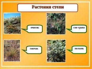 Растения степи очиток типчак сон-трава полынь
