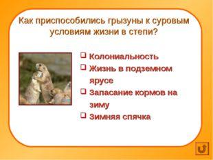 Как приспособились грызуны к суровым условиям жизни в степи? Колониальность