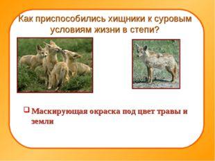 Как приспособились хищники к суровым условиям жизни в степи? Маскирующая окра