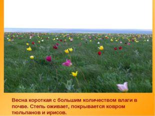 Весна короткая с большим количеством влаги в почве. Степь оживает, покрываетс