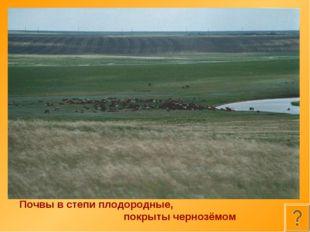 Почвы в степи плодородные, покрыты чернозёмом