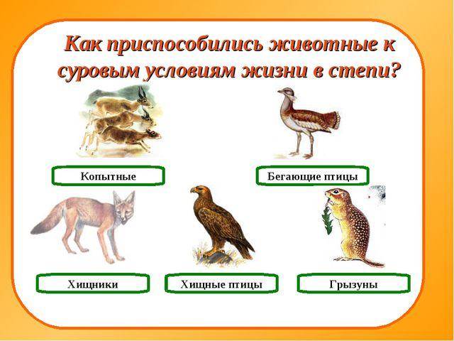 Хищники Грызуны Копытные Как приспособились животные к суровым условиям жизни...