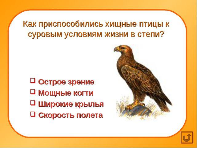 Как приспособились хищные птицы к суровым условиям жизни в степи? Острое зре...