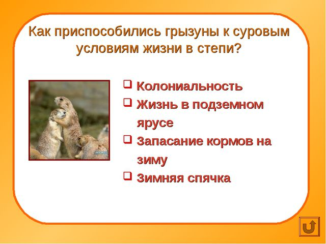Как приспособились грызуны к суровым условиям жизни в степи? Колониальность...