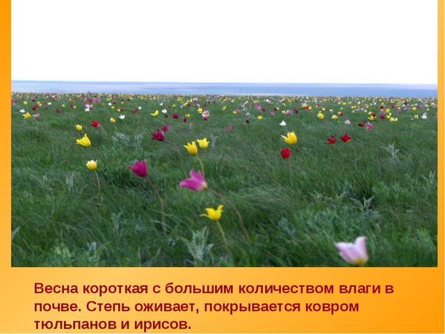Весна короткая с большим количеством влаги в почве. Степь оживает, покрываетс...