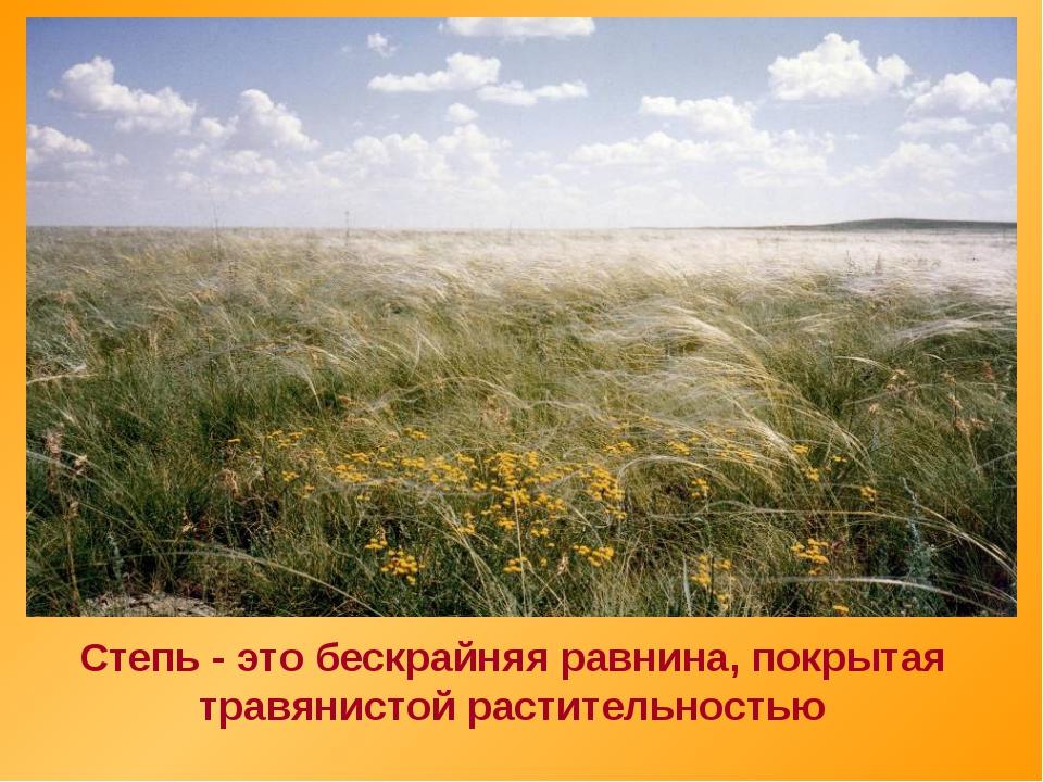 Степь - это бескрайняя равнина, покрытая травянистой растительностью