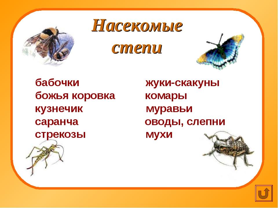 Насекомые степи бабочки жуки-скакуны божья коровка комары кузнечик муравьи са...