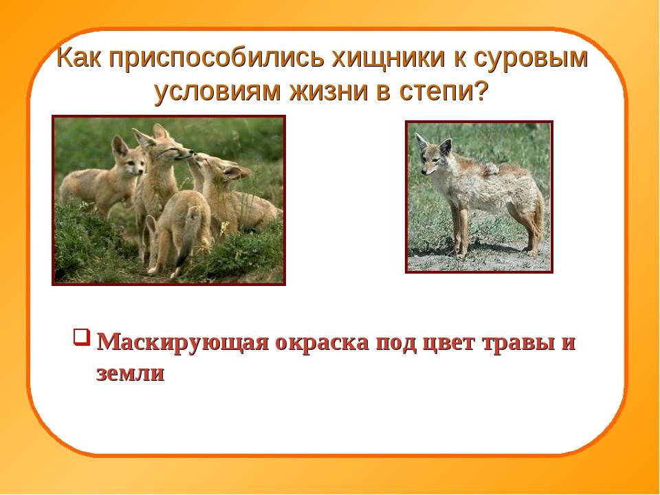 Как приспособились хищники к суровым условиям жизни в степи? Маскирующая окра...