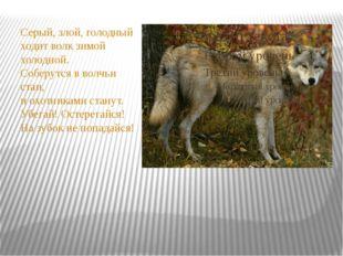 Серый, злой, голодный ходит волк зимой холодной. Соберутся в волчьи стаи, и
