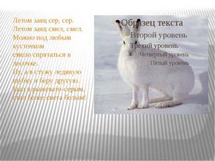 Летом заяц сер, сер. Летом заяц смел, смел. Можно под любым кусточком смело