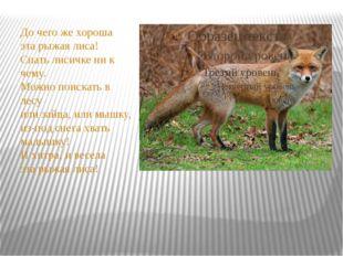 До чего же хороша эта рыжая лиса! Спать лисичке ни к чему. Можно поискать в