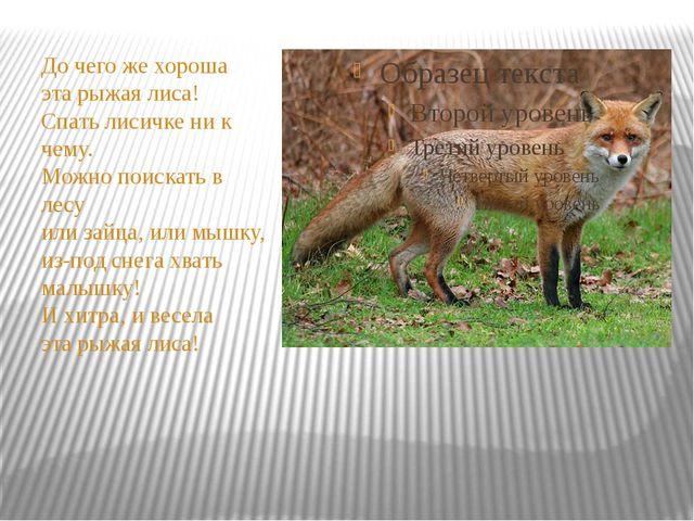До чего же хороша эта рыжая лиса! Спать лисичке ни к чему. Можно поискать в...