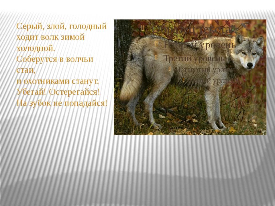 Серый, злой, голодный ходит волк зимой холодной. Соберутся в волчьи стаи, и...
