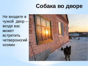 Собака во дворе Не входите в чужой двор – везде вас может встретить четвероно
