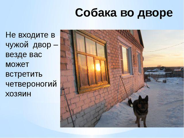 Собака во дворе Не входите в чужой двор – везде вас может встретить четвероно...