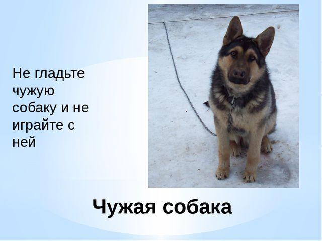Чужая собака Не гладьте чужую собаку и не играйте с ней
