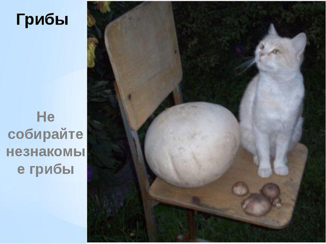 Грибы Не собирайте незнакомые грибы