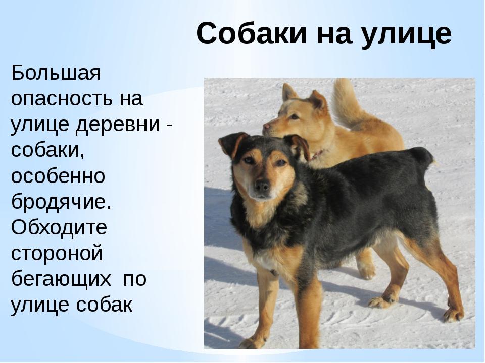 Собаки на улице Большая опасность на улице деревни - собаки, особенно бродячи...