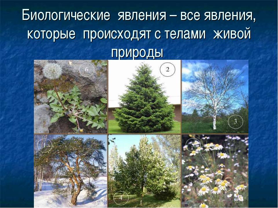 Биологические явления – все явления, которые происходят с телами живой природы