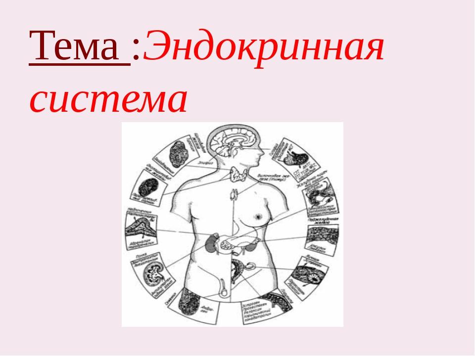 Тема :Эндокринная система