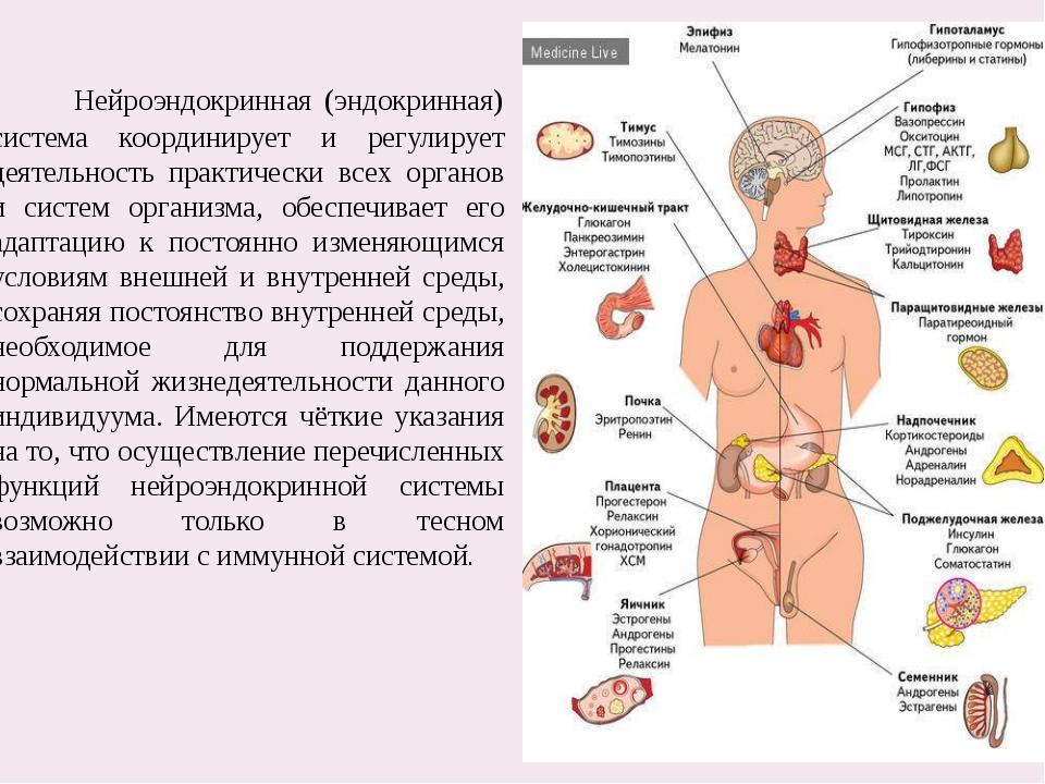 Нейроэндокринная (эндокринная) система координирует и регулирует деятельност...