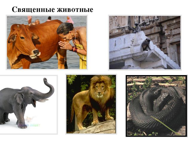 Священные животные