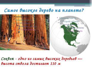 Самое высокое дерево на планете? Секвоя - одно из самых высоких деревьев — вы
