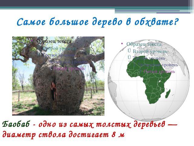 Самое большое дерево в обхвате? Баобаб - одно из самых толстых деревьев — диа...