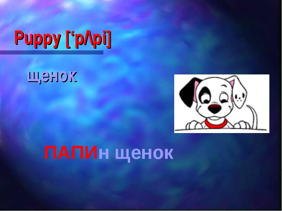 Puppy ['p/\pi] щенок ПАПИн щенок