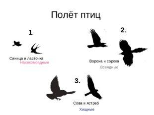 Полёт птиц 1. 2. 3. Синица и ласточка Ворона и сорока Сова и ястреб Насекомоя