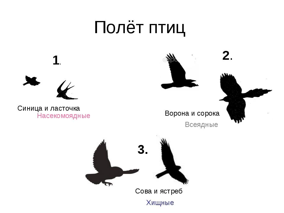 Полёт птиц 1. 2. 3. Синица и ласточка Ворона и сорока Сова и ястреб Насекомоя...