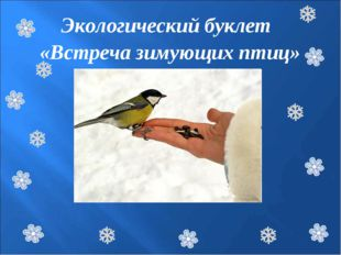 Птицы зимой Экологический буклет «Встреча зимующих птиц»