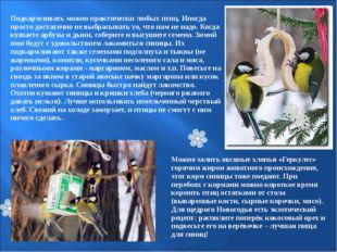 Подкармливать можно практически любых птиц. Иногда просто достаточно не выбр