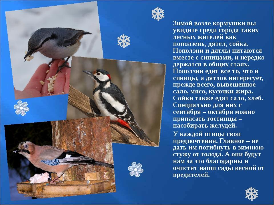 Зимой возле кормушки вы увидите среди города таких лесных жителей как попо...