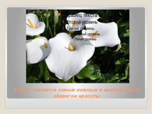 Калла считается самым нежным и женственным оберегом красоты
