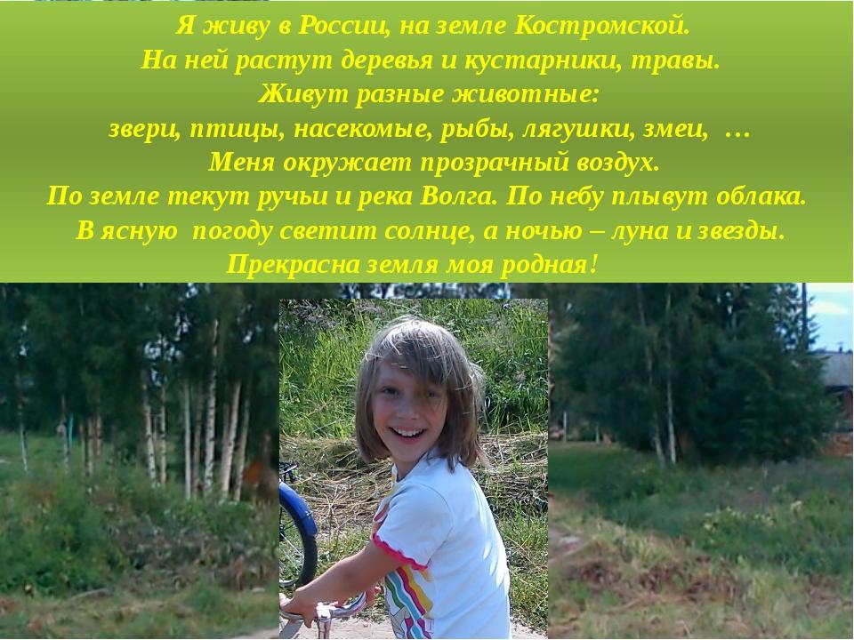 Я живу в России, на земле Костромской. На ней растут деревья и кустарники, т...
