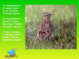 Жаворонок устраивает гнездовье в лугах, на травянистых опушках, но самым луч