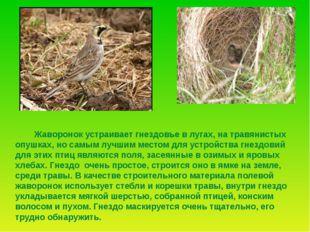 Зяблик Эта птичка прилетает в наши края весной, когда ещё холодно, зябко. За